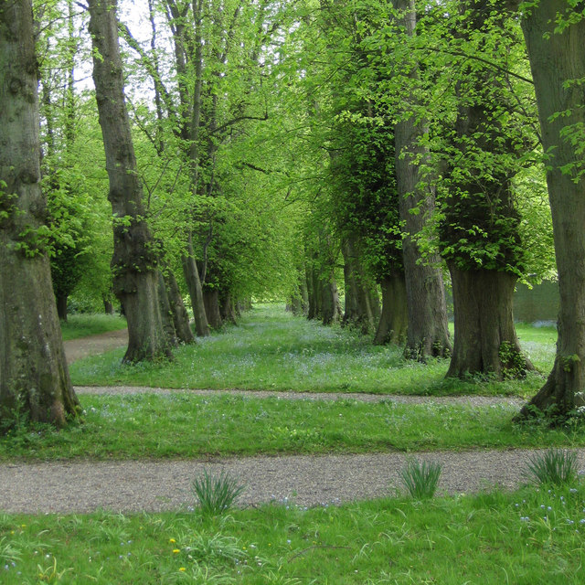 Paths and lime trees