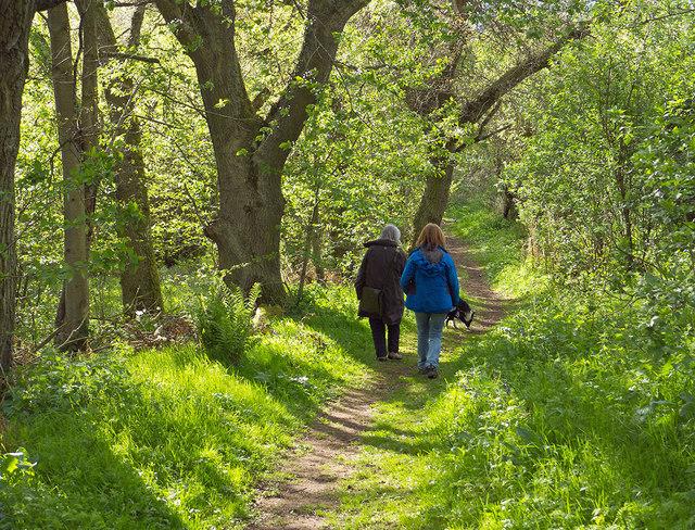 Leaving Drummondreach Wood
