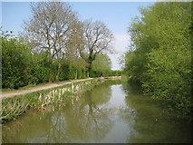 SP7190 : Grand Union Canal: Market Harborough Arm by Nigel Cox