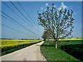 TL1481 : Farm track with power cables by Kim Fyson
