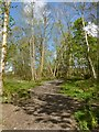 NS2883 : Footpath in Duchess Wood by Lairich Rig