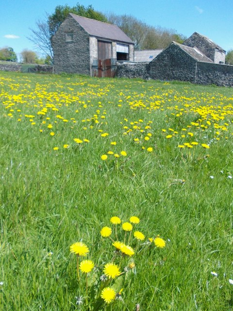 Farm buildings and dandelions north of Flag Dale