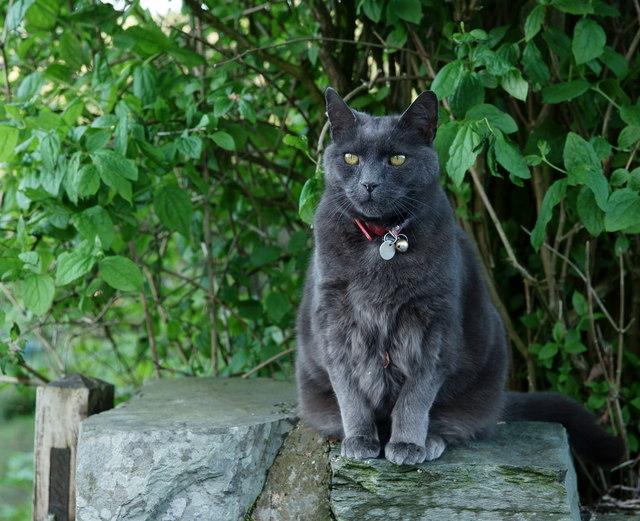 The Sociable Cat