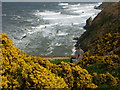 NT7871 : Coastal Berwickshire : Houses at Cove Harbour by Richard West