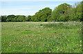 TM2390 : Meadow beside Primrose Lane, Shelton Green by Evelyn Simak