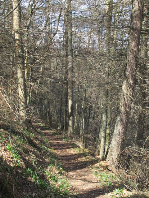 Path in woodland near Derwent Head