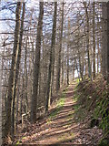 NY9449 : Path in woodland near Derwent Head (2) by Mike Quinn