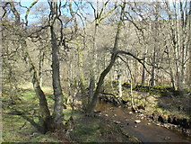 NY9449 : Beldon Burn by Gibraltar Banks by Mike Quinn