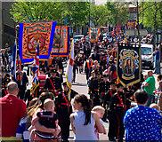 J5081 : Parade, Bangor by Rossographer