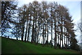 TQ0141 : Trees near Wintershall by N Chadwick