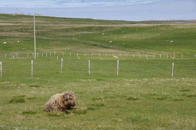 Fields on Aith Ness