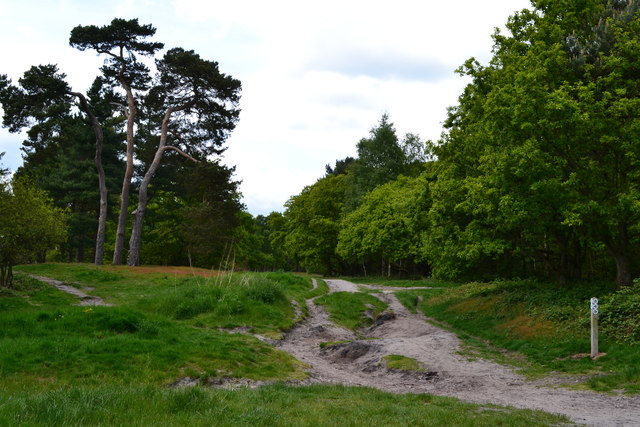 Track on Reigate Heath