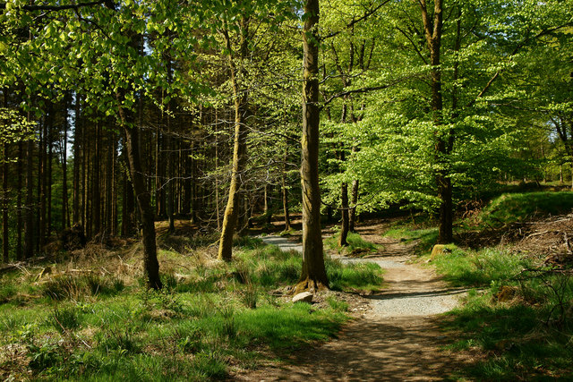Track in Grizedale Forest