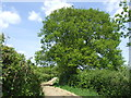 TQ3416 : Bridleway near Plumpton, East Sussex by Malc McDonald
