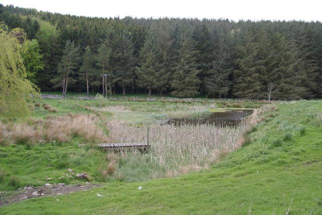 Pond below Churchbrae Plantation