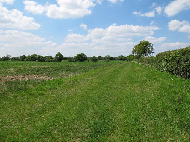 Field near Baldwin's Farm, Great Tey
