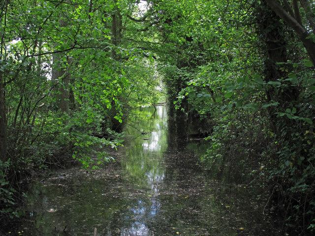 Florie's Farm Moat, Great Tey