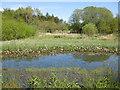 SE6969 : Springtime, Sata Pond, The Yorkshire Arboretum by Pauline E