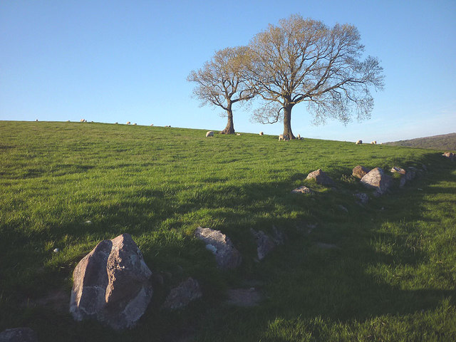 Old field boundary, Hanging Hill