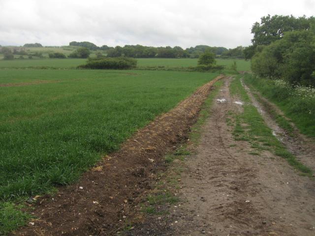 Track by Little Wildcroft Field by Sandy B
