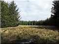 NH6597 : Moorland space in coniferous plantation by Trevor Littlewood