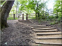 SJ9594 : Steps out of Gower Hey Woods by Gerald England