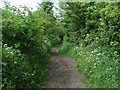 SU8278 : Muddy footpath by Alan Hunt