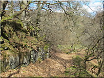 NY9449 : Path in woodland at Gibraltar Banks (3) by Mike Quinn