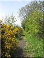 NU1327 : Overgrown footpath near Warenford Cricket Club by Graham Robson