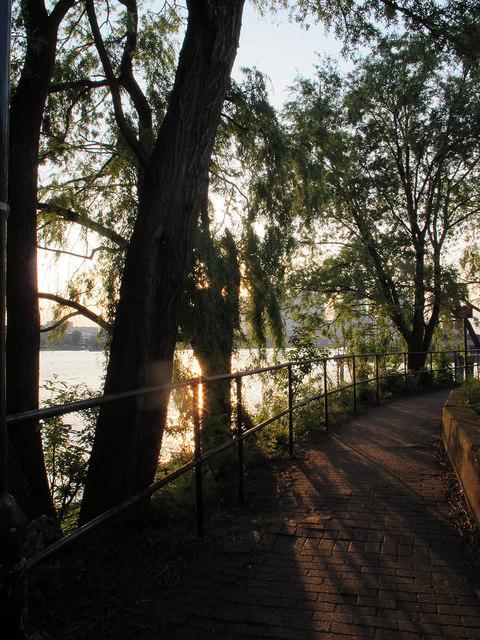 Sun through the willows
