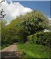 ST2502 : Beacon Hill Lane by Derek Harper