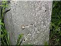 SK4738 : Bench mark on gatepost, Seven Oaks Road by Alan Murray-Rust