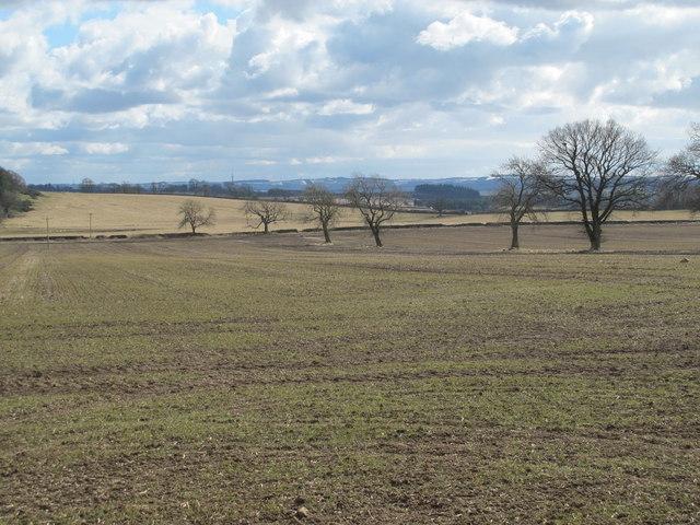 Farmland on Carrs Fell (2)