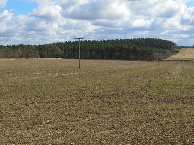 Farmland on Carrs Fell and Shildonhill Plantation