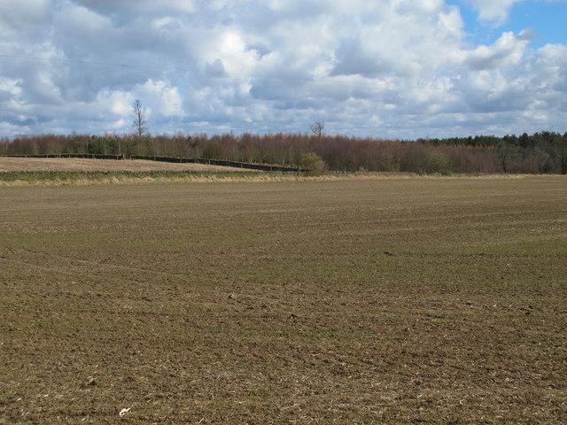 Farmland on Carrs Fell and Carrsfell Plantation