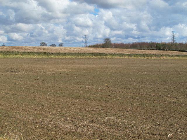 Farmland on Carrs Fell and Carrsfell Plantation (2)