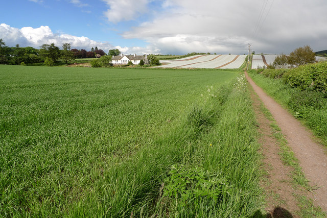 Newly sown field, north-east of Muirhall Farm