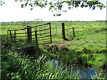 TM4592 : Cattle pastures by Sutton's Farm, Aldeby by Evelyn Simak