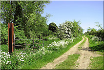 TM4592 : Track by Sutton's Farm, Aldeby by Evelyn Simak