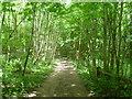 TQ4844 : Eden Valley Walk passing through Park Wood by Marathon