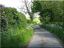 NY3559 : A lane beside the River Eden by David Purchase