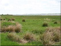 NY2362 : Bowness Marsh and Bowness Wath by David Purchase