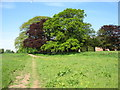 NY4359 : Hadrian's Wall Path passing Eden Grove by David Purchase