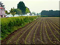 SO7219 : Maize drills by the A40 at Huntley by Jonathan Billinger