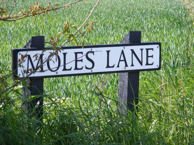Moles Lane sign