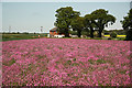 SK8971 : Wildflowers by route 64 by Richard Croft