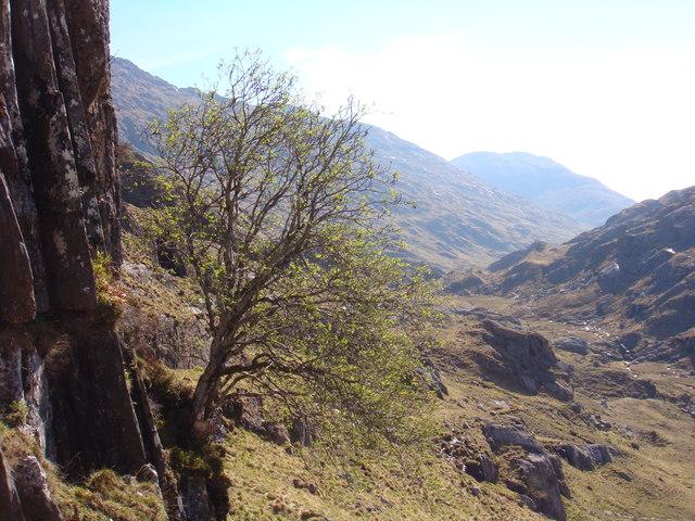 Rowan crag above Mam na Cloich' Airde