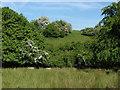 SU8973 : Chawridge Valley by Alan Hunt