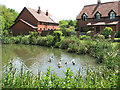 TM4294 : Ducks in the village pond, Toft Monks by Evelyn Simak