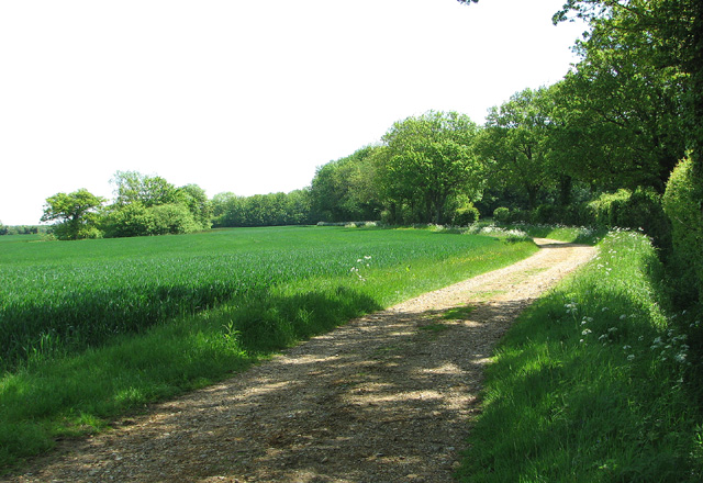 View along Boot's Lane